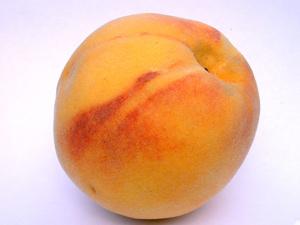 Suwanee Peach Tree