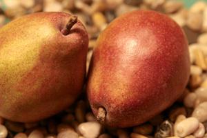 Comice Pear Tree