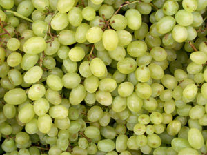 Thompson Bunch Grape Vine