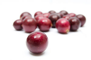 Southern Dixie Muscadine