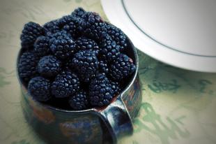 Cumberland Black Raspberry Plant
