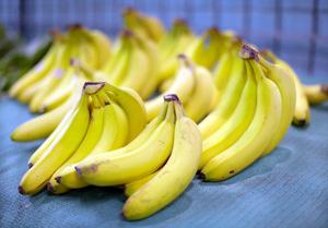 Pisang Ceylon Banana Plant