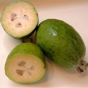 Pineapple Guava Tree