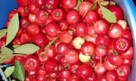 Reliable Mayhaw Tree