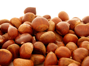 Nevada Chestnut Tree