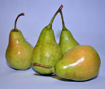 Perdue Pear Tree