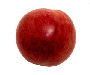 Plumcot Hybrid Apricot