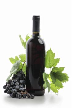 Lomanto Wine Grape Vine