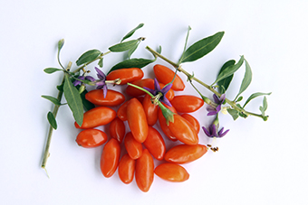 Goji Plant Goji Berry Plant For Sale Willis Orchards
