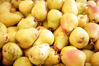 Fan-Stil Pear Tree