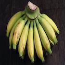Lady Finger Banana Plant