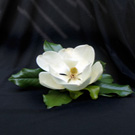 Magnolia Grandiflora 'Claudia Wannamaker'