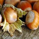 Beaked Hazelnut
