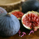 Italian Everbearing Fig Tree