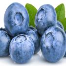 Titan™ Blueberry