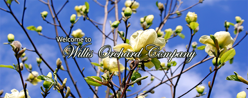 Fruit Trees For Sale Buy Fruit Landscaping Trees Willis Orchards