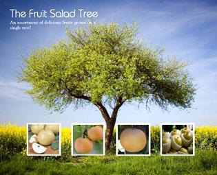 Fuckin asian pear tree height