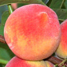 Red Baron Peach Tree