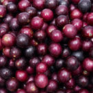Red Scarlet Muscadine