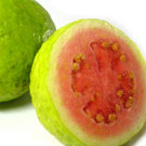 White Indian Guava Tree
