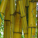 Robert Young Bamboo Plant