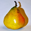 Perdue Pear Tree