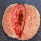 Indian Blood Peach Tree